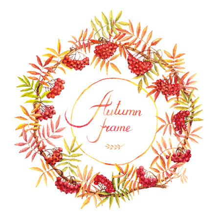 rowan tree: Round frame with autumn rowan branches. Berries and leaves. Vectorized watercolor drawing.