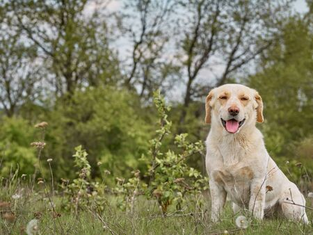 Village dog on the field.