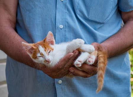Portrait of kitten in the hands.