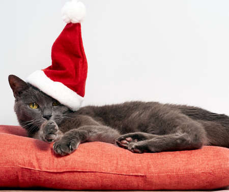 Resting cat wearing a Santa Claus Christmas hat Stock Photo
