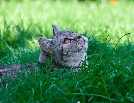 Kitten in the green grass. Stock Photo