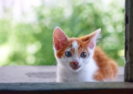 Kitten playing in the garden.