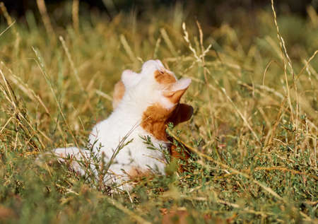 Kitten playing in the grass.