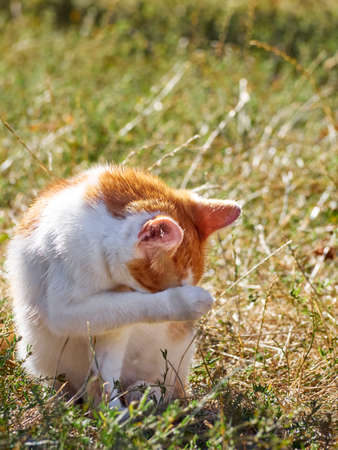 Red young cat in the garden. Stock Photo