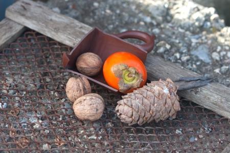 bois �b�ne: �b�ne, noyer, pomme de pin et la moiti� de la poterie peut