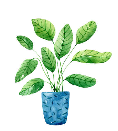 Green houseplant in a blue flower pot isolated on white background. Watercolor hand-drawn illustration. Perfect for your project, prints, cards, covers, posters, decorations, patterns, invitations.