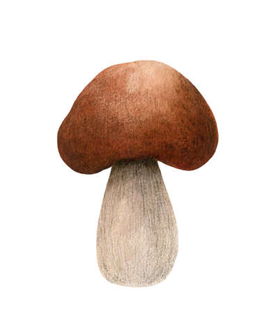 One brown cap boletus isolated on white background. Autumn forest mushroom clipart. Watercolor hand-drawn illustration. Perfect for your project, recipe, menu, cards, prints, covers or patterns.