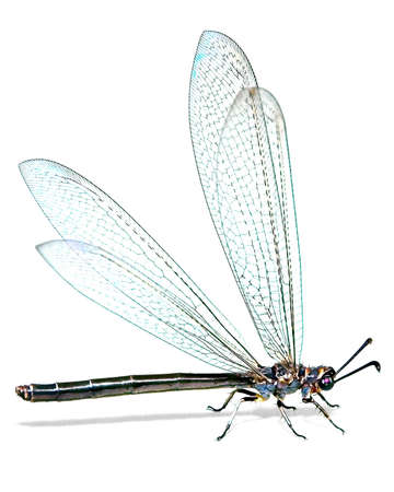 Large dragonfly on a white background, side view. Stock Photo - 2336881
