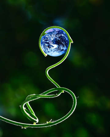 Green stalk growing in circle, holding planet Earth (Earth image courtesy of NASA - Blue Marble, mission Apollo 17)