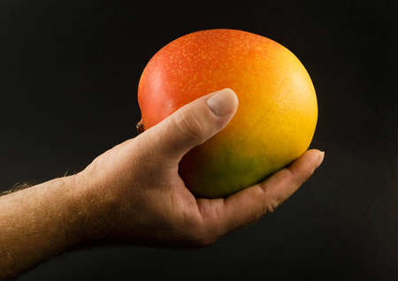 Large mango fruit in outstretched hand, on black background Stock Photo