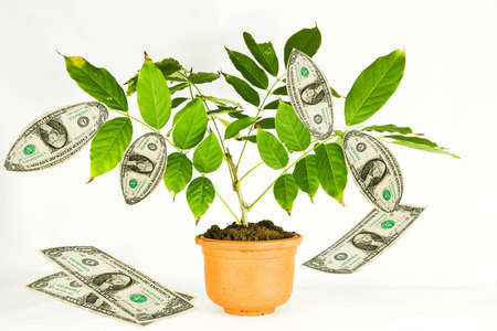 Small green plant with dollar notes growing among leaves Stock Photo