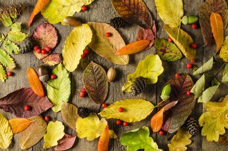 leaf texture: Autumn leaves background