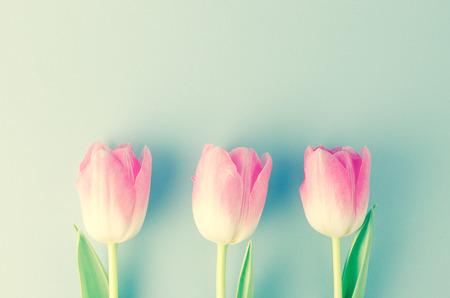 Rose tulipes  Banque d'images - 52537351