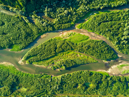 Aerial view of forest and river