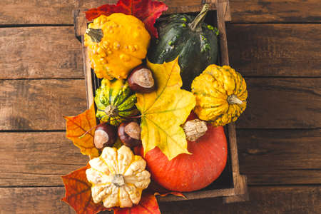 Overhead shot of colorful autumn pumpkins and leaves in box on wooden table. Thanksgiving and Halloween concept. Flat lay