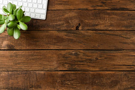 Elegant computer keyboard and small green flower on wooden table. Business background