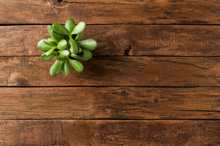 Small green plant on vintage wooden table with copyspace. Top view