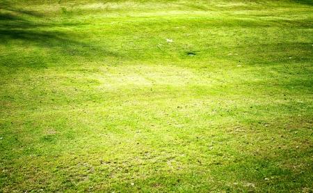 Green grass field , golf course photo