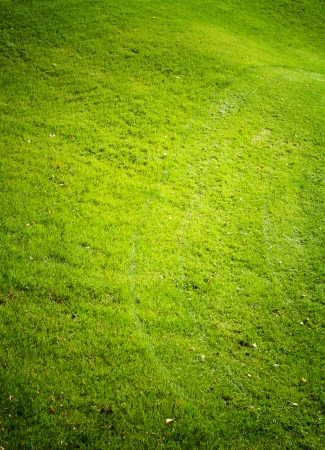 Green grass field , golf course photo