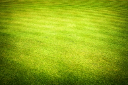 Green grass field of golf course  Stock Photo