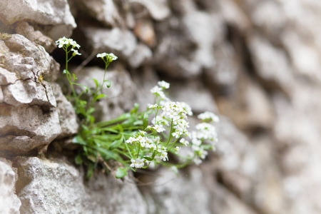 meagre: Maco blooming flowers on the rock