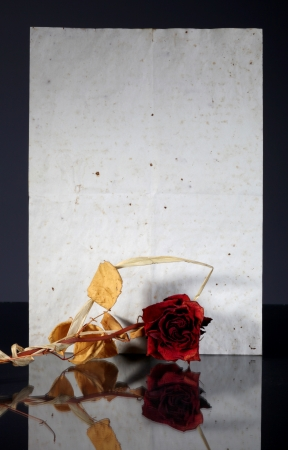 Old vintage paper page and wilted rose reflected in dark surface photo
