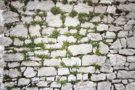 Stone wall covered moss and plants, texture