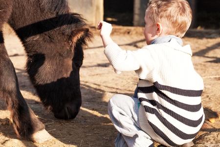 helpfulness: Child with pony in the mini zoo