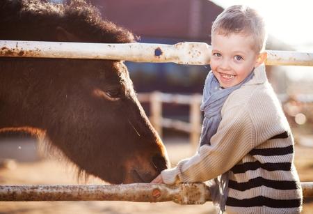 helpfulness: Child feeding pony in the mini zoo Stock Photo