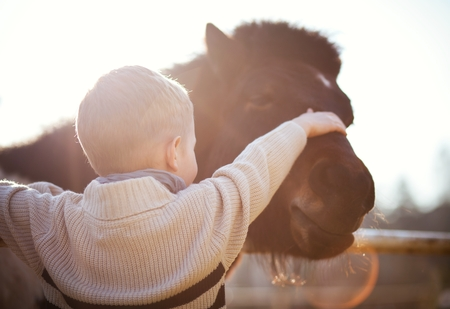 helpfulness: Child stroking pony in mini zoo, love and affection Stock Photo