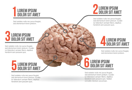 Human brain infographic vector illustration Vector