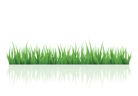 grass illustration: green grass for your project with copy space