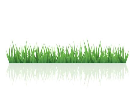 hierba verde para su proyecto, con copia espacio