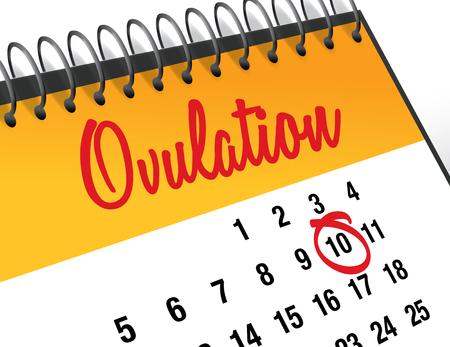 infertile: Ovulation Day mark on calendar vector illustration Stock Photo