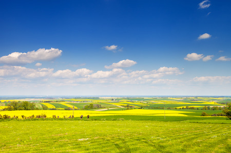 Yellow and green agriculture rapeseed field landscape canola or colza panoramic view Stock Photo