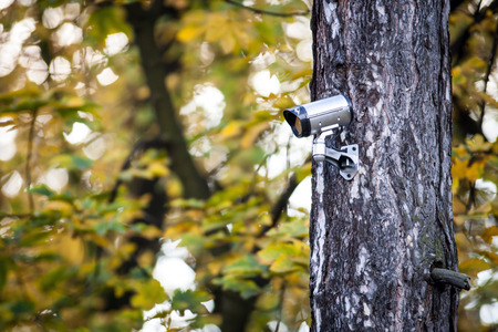 Security camera on tree, surveillance in the forest