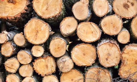 Pile of wood logs, wood texture Stock fotó