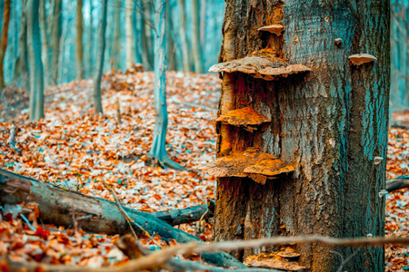 Old tree with fungus 스톡 콘텐츠