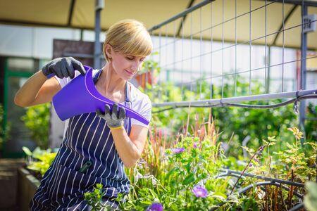 Gardener woman watering plants in garden center Reklamní fotografie