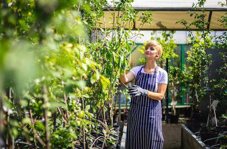 Garden center employee supervises the plants