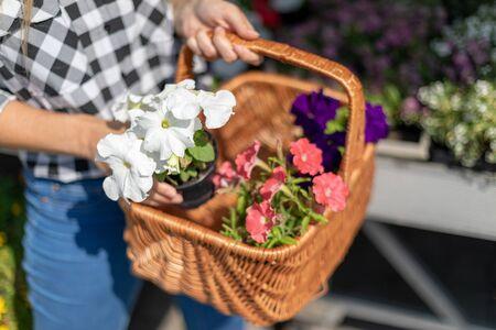 Customer with basket full of flowers in garden center Reklamní fotografie