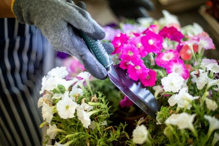 Gardener wearing gloves working with flowers, detail close up