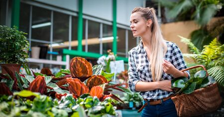 Customer woman in garden center looking for plants 写真素材