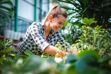 Woman shopping for and looking at plants in garden center