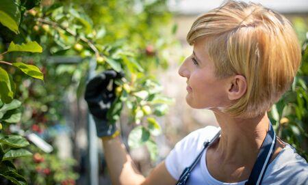 Gardener woman during work in garden center looking at plants