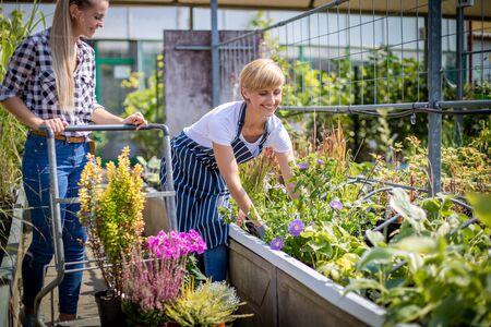 Gardener woman advising female client during buying plants in the garden center