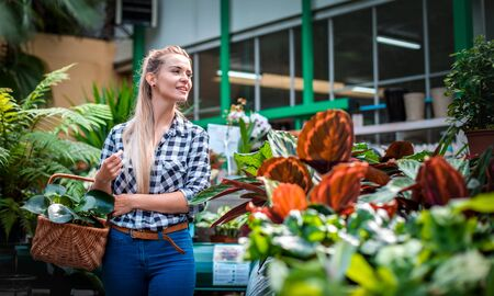 Customer woman in garden center looking for plants Stockfoto