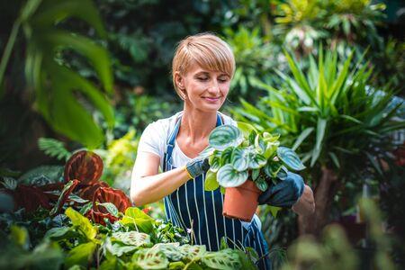 Smiling employee during work in garden center Stockfoto