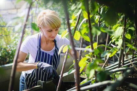 Gardener woman working in garden center