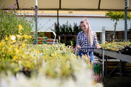 Customer pushing the trolley between the rows of plants in garden center Stockfoto